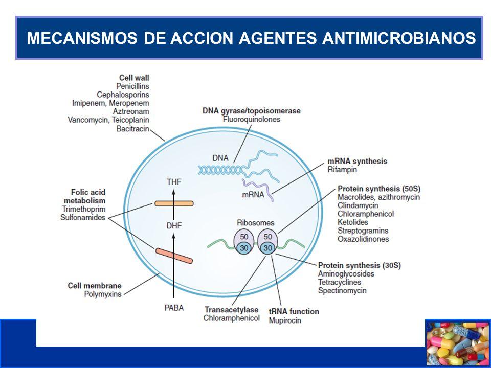 Mecanismo de resistencia a meticilina Modificación de PBPs (proteína fijadora de penicilina).