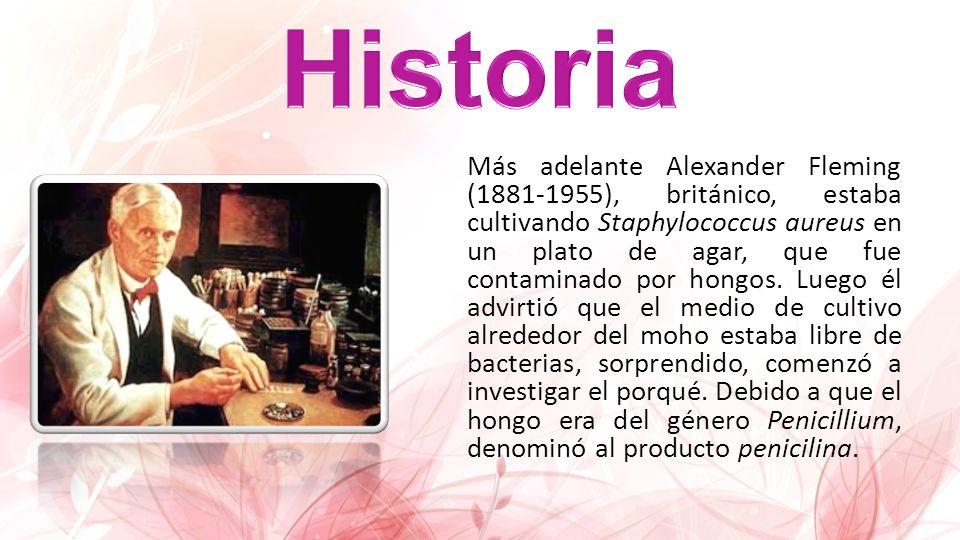 Más adelante Alexander Fleming (1881-1955), británico, estaba cultivando Staphylococcus aureus en un plato de agar, que fue contaminado por hongos. Lu