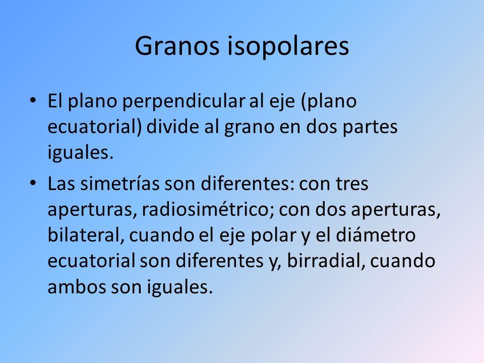Granos isopolares El plano perpendicular al eje (plano ecuatorial) divide al grano en dos partes iguales. Las simetrías son diferentes: con tres apert