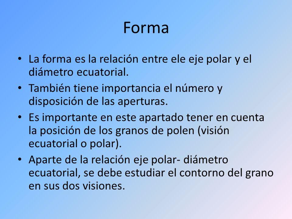 Forma La forma es la relación entre ele eje polar y el diámetro ecuatorial. También tiene importancia el número y disposición de las aperturas. Es imp