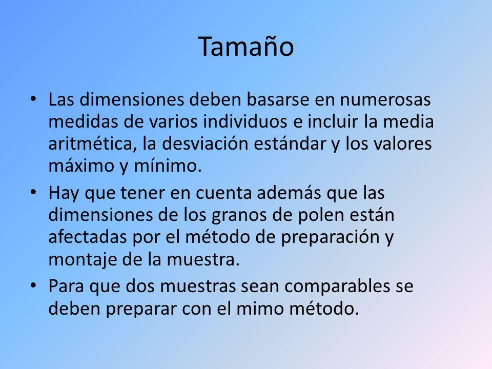 Tamaño Las dimensiones deben basarse en numerosas medidas de varios individuos e incluir la media aritmética, la desviación estándar y los valores máx