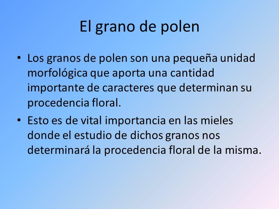 El grano de polen Los granos de polen son una pequeña unidad morfológica que aporta una cantidad importante de caracteres que determinan su procedenci