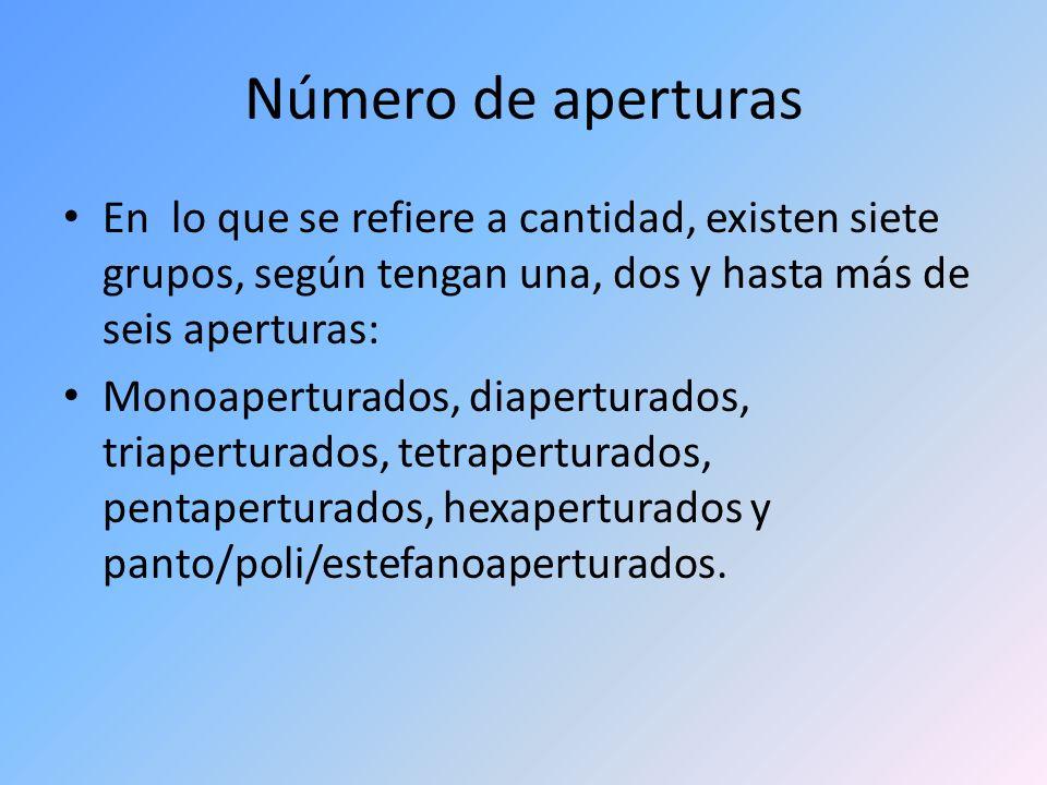 Número de aperturas En lo que se refiere a cantidad, existen siete grupos, según tengan una, dos y hasta más de seis aperturas: Monoaperturados, diape