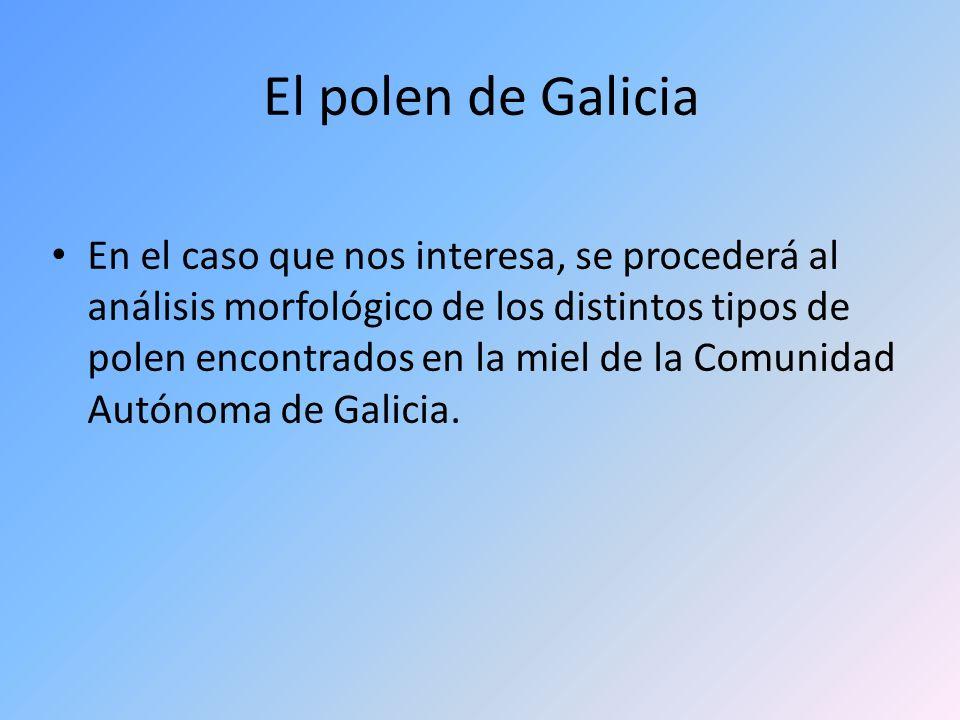 El polen de Galicia En el caso que nos interesa, se procederá al análisis morfológico de los distintos tipos de polen encontrados en la miel de la Com