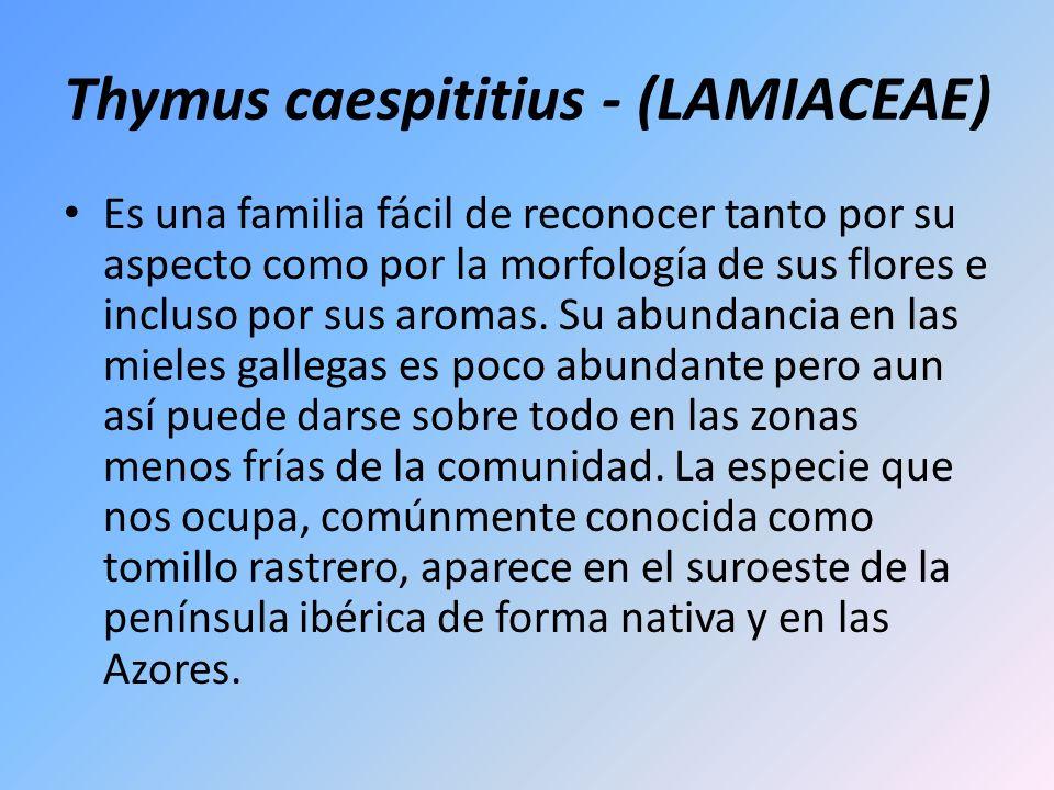 Thymus caespititius - (LAMIACEAE) Es una familia fácil de reconocer tanto por su aspecto como por la morfología de sus flores e incluso por sus aromas