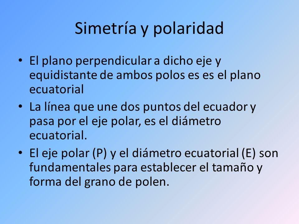 Simetría y polaridad El plano perpendicular a dicho eje y equidistante de ambos polos es es el plano ecuatorial La línea que une dos puntos del ecuado