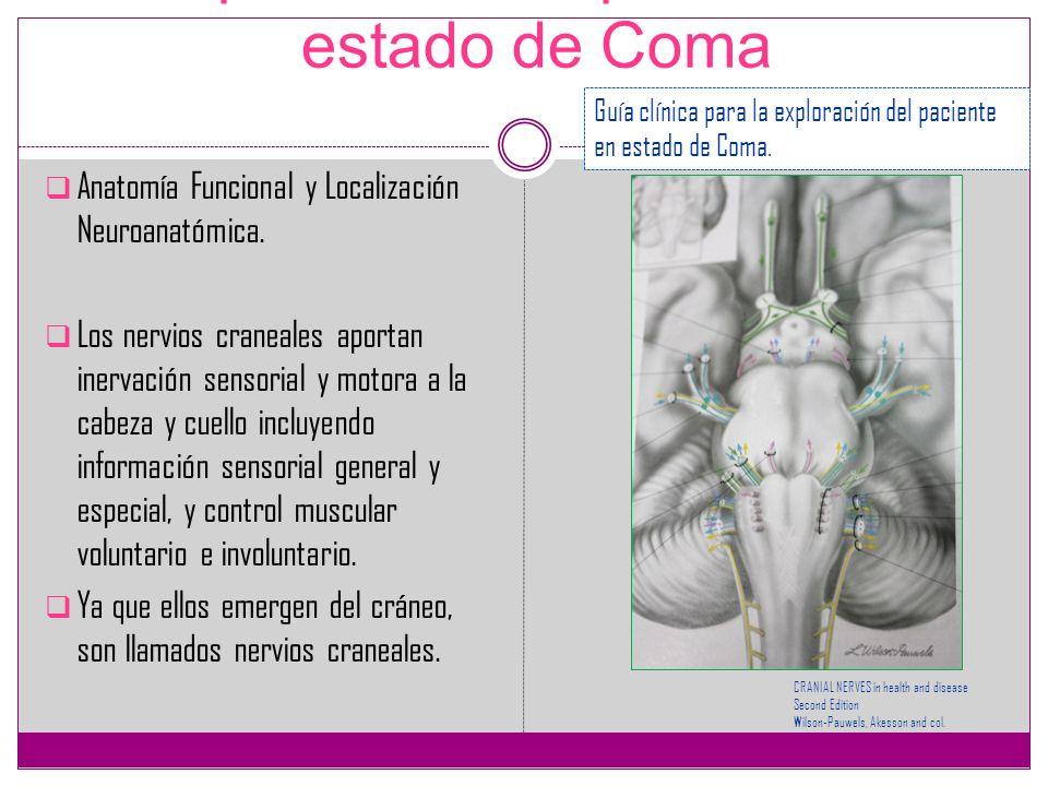 Exploración del paciente en estado de Coma Anatomía Funcional y Localización Neuroanatómica. Los nervios craneales aportan inervación sensorial y moto