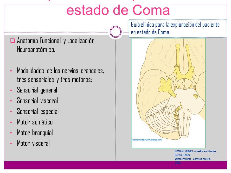 Exploración del paciente en estado de Coma Anatomía Funcional y Localización Neuroanatómica. Modalidades de los nervios craneales, tres sensoriales y