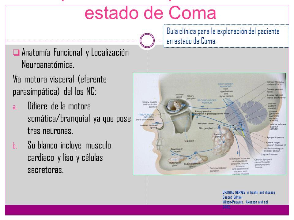 Exploración del paciente en estado de Coma Anatomía Funcional y Localización Neuroanatómica. Vía motora visceral (eferente parasimpática) del los NC: