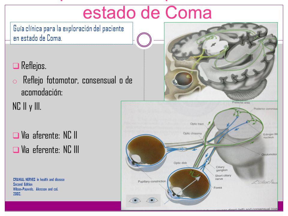 Exploración del paciente en estado de Coma Reflejos. o Reflejo fotomotor, consensual o de acomodación: NC II y III. Vía aferente: NC II Vía eferente: