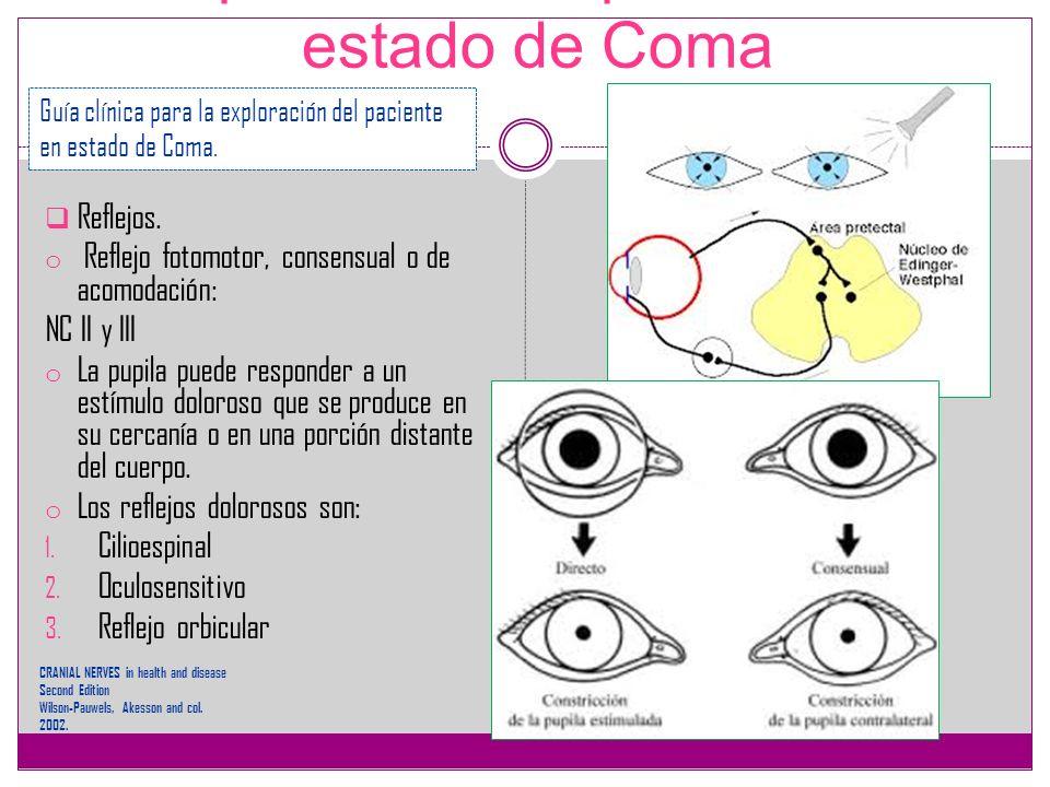 Exploración del paciente en estado de Coma Reflejos. o Reflejo fotomotor, consensual o de acomodación: NC II y III o La pupila puede responder a un es