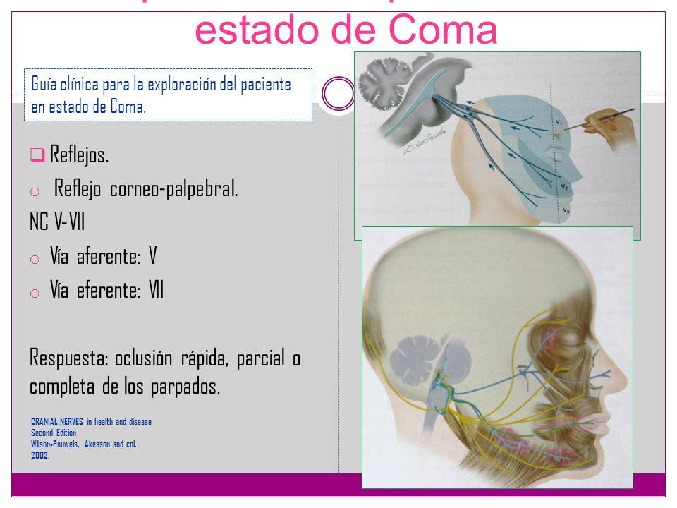 Exploración del paciente en estado de Coma Reflejos. o Reflejo corneo-palpebral. NC V-VII o Vía aferente: V o Vía eferente: VII Respuesta: oclusión rá