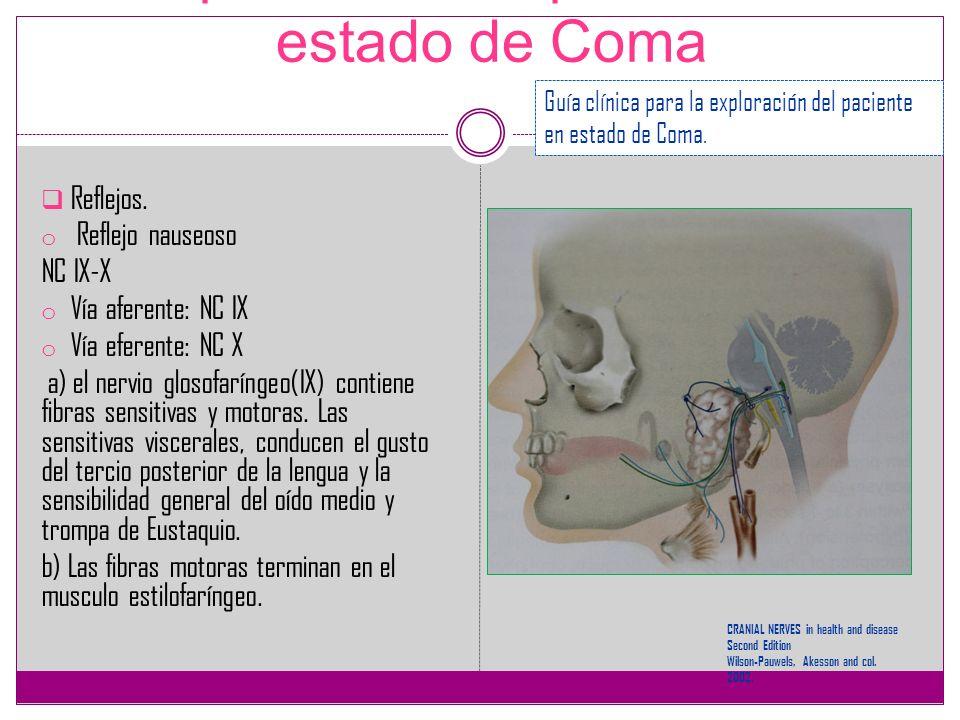 Exploración del paciente en estado de Coma Reflejos. o Reflejo nauseoso NC IX-X o Vía aferente: NC IX o Vía eferente: NC X a) el nervio glosofaríngeo(
