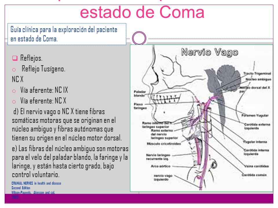 Exploración del paciente en estado de Coma Reflejos. o Reflejo Tusígeno. NC X o Vía aferente: NC IX o Vía eferente: NC X d) El nervio vago o NC X tien