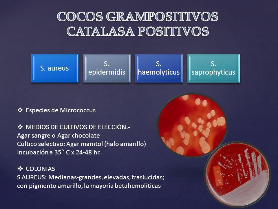 S.aureus S. epidermidis S. haemolyticus S.