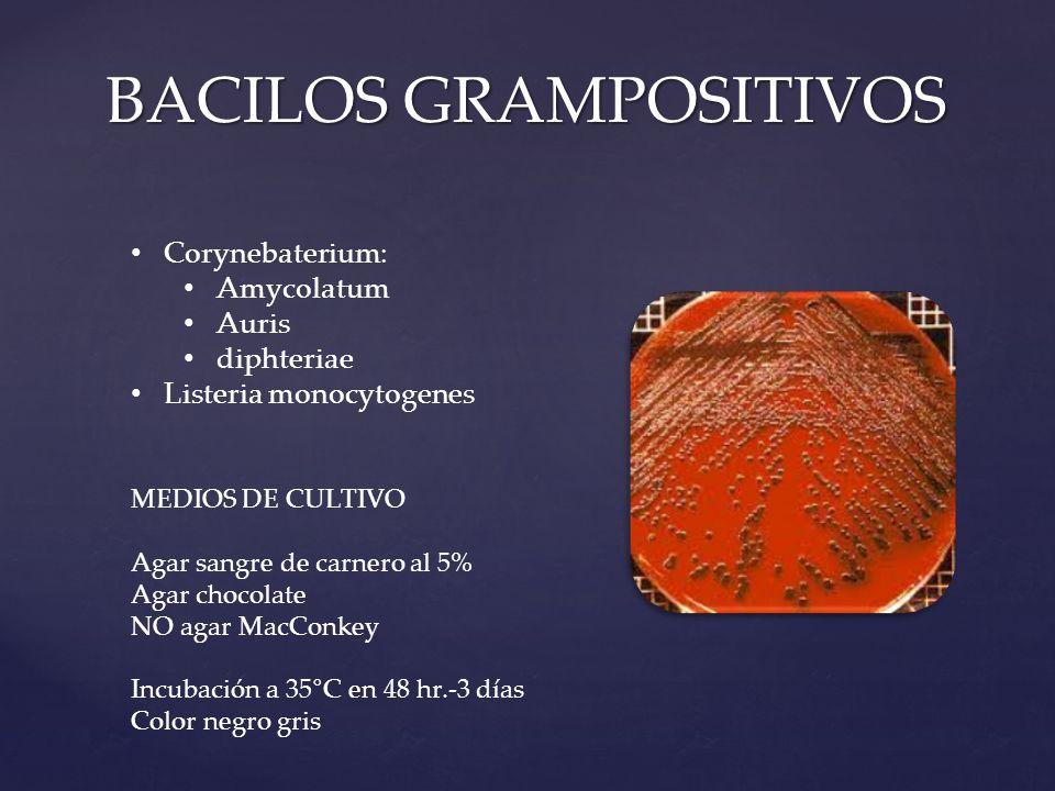 BACILOS GRAMPOSITIVOS Corynebaterium: Amycolatum Auris diphteriae Listeria monocytogenes MEDIOS DE CULTIVO Agar sangre de carnero al 5% Agar chocolate NO agar MacConkey Incubación a 35°C en 48 hr.-3 días Color negro gris