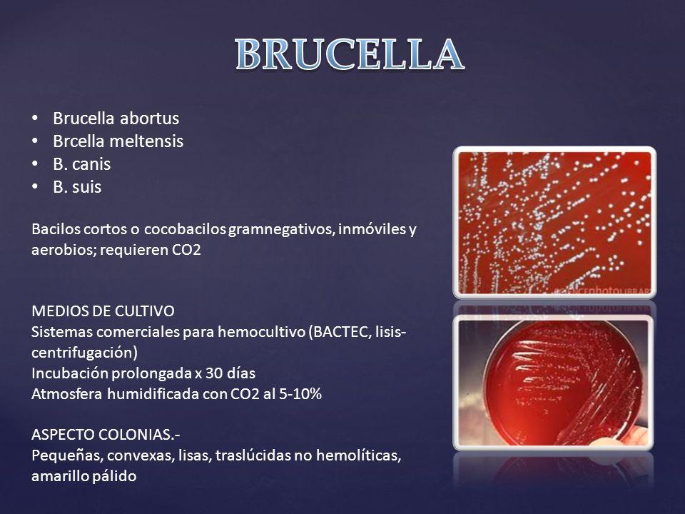 Brucella abortus Brcella meltensis B.canis B.