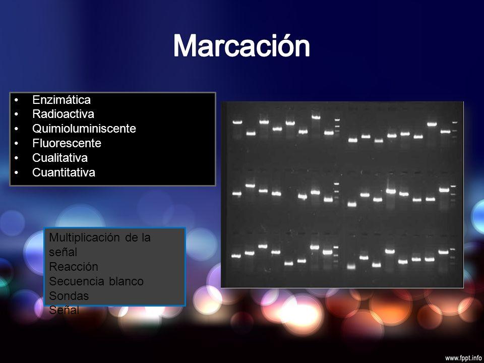 Enzimática Radioactiva Quimioluminiscente Fluorescente Cualitativa Cuantitativa Multiplicación de la señal Reacción Secuencia blanco Sondas Señal