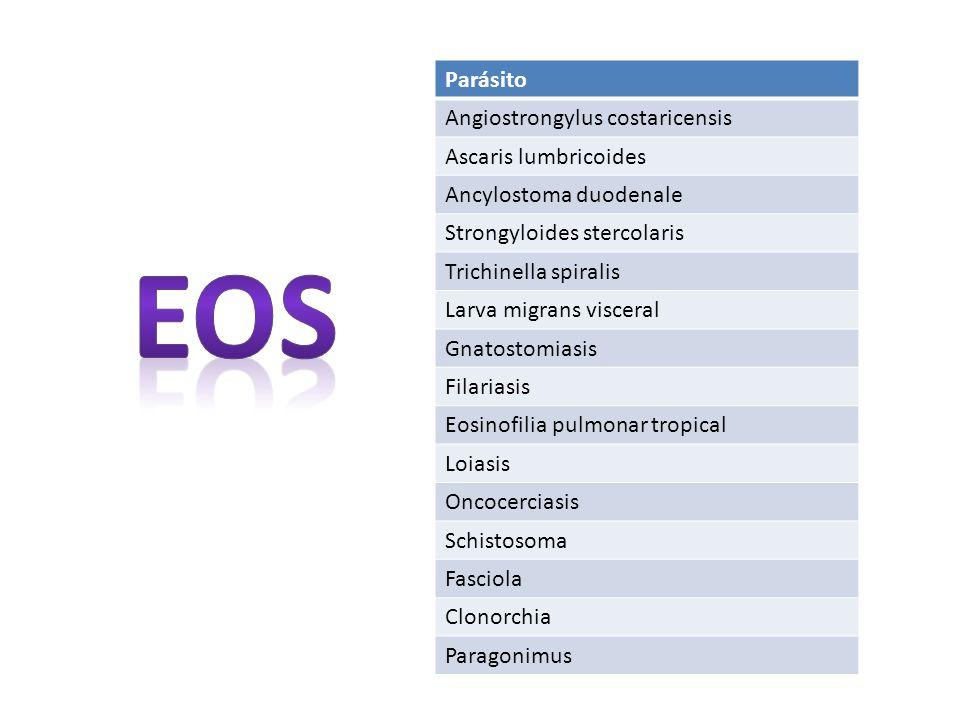 Angiostrongilosis Angiostrongylus costaricensis 1971 descrita por Dr Rodolfo Céspedes y Dr Pedro Morera Nemátodo Roedores – Babosas – caracoles Dolor abdominal agudo, fiebre y eosinofilia; vomitos, hemorragia GI o masa palpable (granuloma) Puede ser mortal (<2a) Dx: test de aglutinación de partículas de látex (Test de Morera) Tx: quirúrgico PRN, conservador, antiparasitarios ?