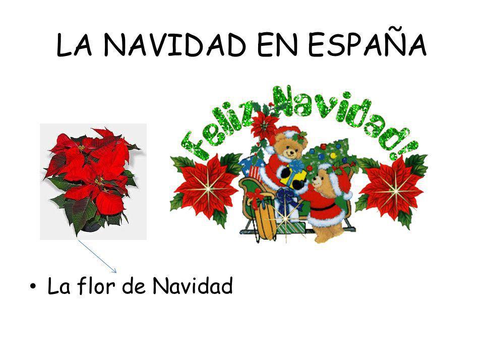 LA NAVIDAD EN ESPAÑA La flor de Navidad