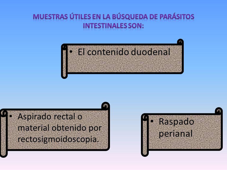 El contenido duodenal Raspado perianal Aspirado rectal o material obtenido por rectosigmoidoscopia.