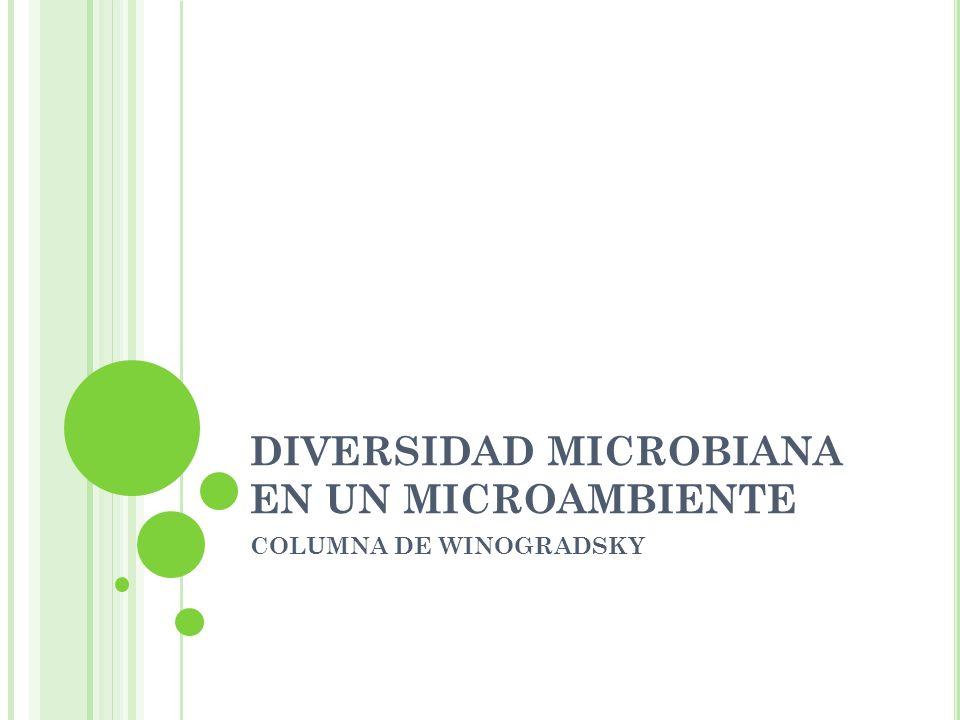 DIVERSIDAD MICROBIANA EN UN MICROAMBIENTE COLUMNA DE WINOGRADSKY
