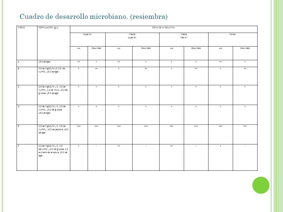 MEDIOFORMULACIÓN (g/L)ZONA DE LA COLUMNA Superior Media superior Media inferior Fondo LuzOscuridadLuzOscuridadLuzOscuridadLuzOscuridad A15.0 de agar++