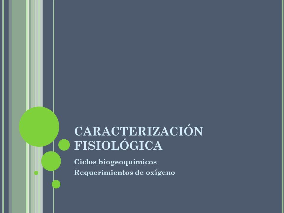 CARACTERIZACIÓN FISIOLÓGICA Ciclos biogeoquímicos Requerimientos de oxígeno