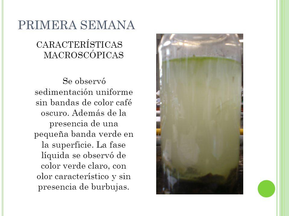 CUARTA SEMANA CARACTERÍSTICAS MACROSCÓPICAS Se observó sedimentación de color negro (zona anaerobia).