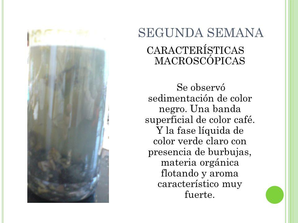 CARACTERÍSTICAS MACROSCÓPICAS Se observó sedimentación de color negro. Una banda superficial de color café. Y la fase líquida de color verde claro con