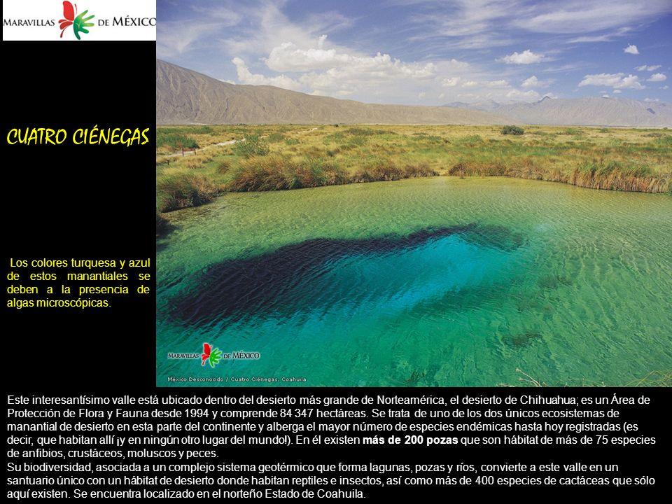 CUATRO CIÉNEGAS Los colores turquesa y azul de estos manantiales se deben a la presencia de algas microscópicas.