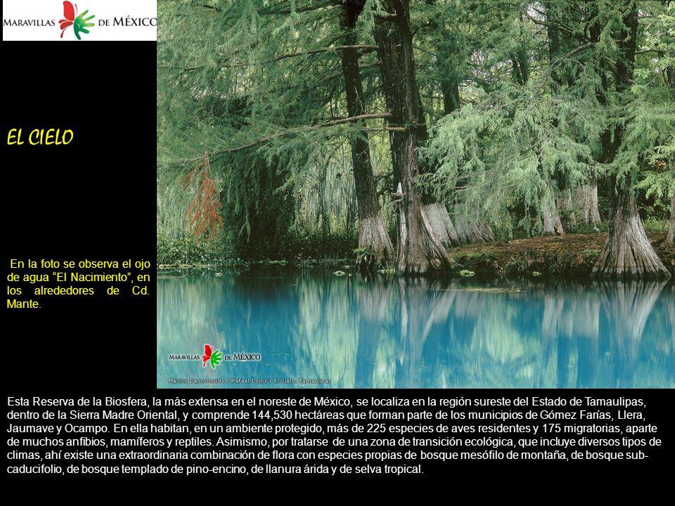 EL CIELO En la foto se observa el ojo de agua El Nacimiento, en los alrededores de Cd.