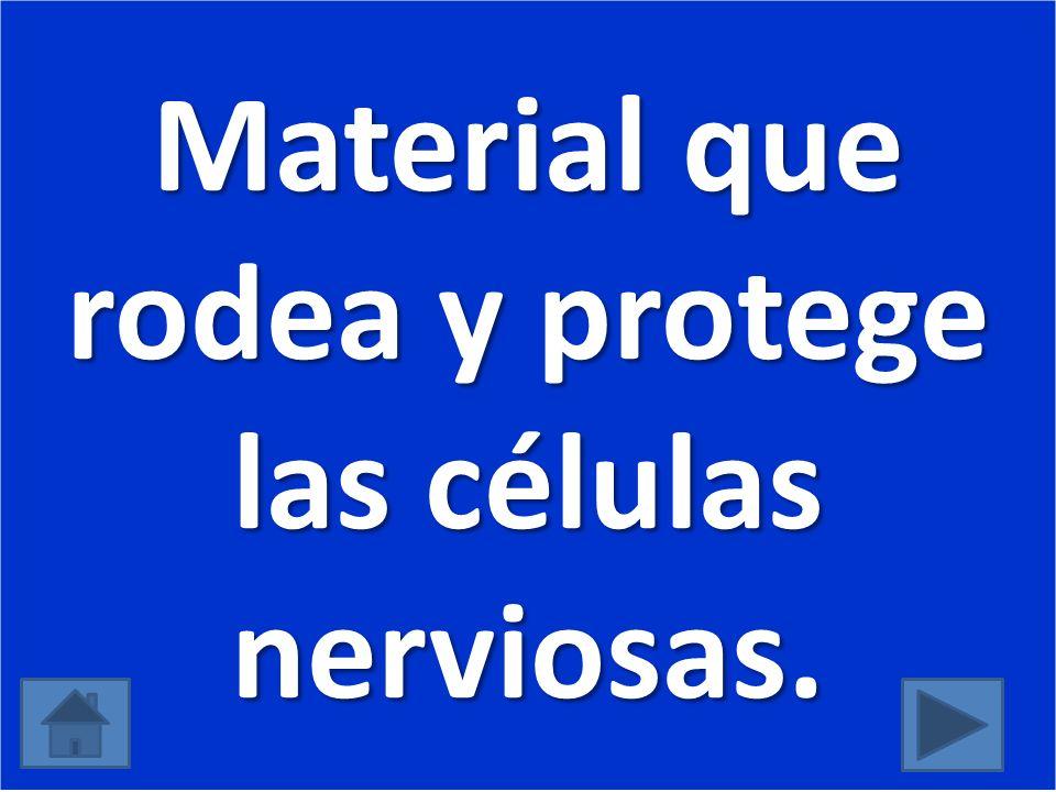 Material que rodea y protege las células nerviosas.