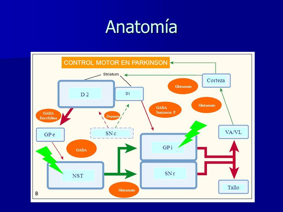Anatomía D 2 Tallo NST D1 SN c GP e GABA Encefalina GABA Sustancia P Dopamina Corteza GABA Glutamato SN r GP i VA/VL CONTROL MOTOR EN PARKINSON Glutamato