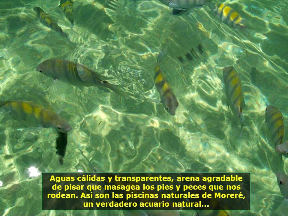 Emoción a flor de piel. Vamos de excursión a la Isla de Boipeba en estos flexs boats, para conocer las piscinas naturales que se forman con la bajamar