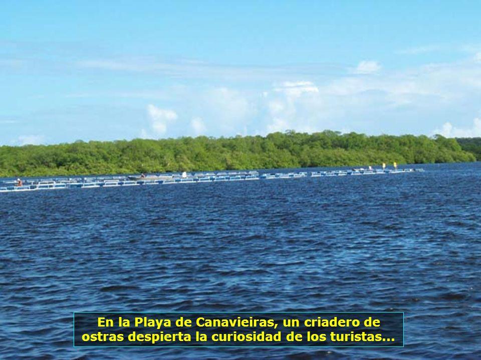 Ambiente rústico, barracas de hojas de palmera piaçava. Así es la Playa de Boca de la Barra, en Boipeba, un lugar paradisíaco, de aguas límpidas y are