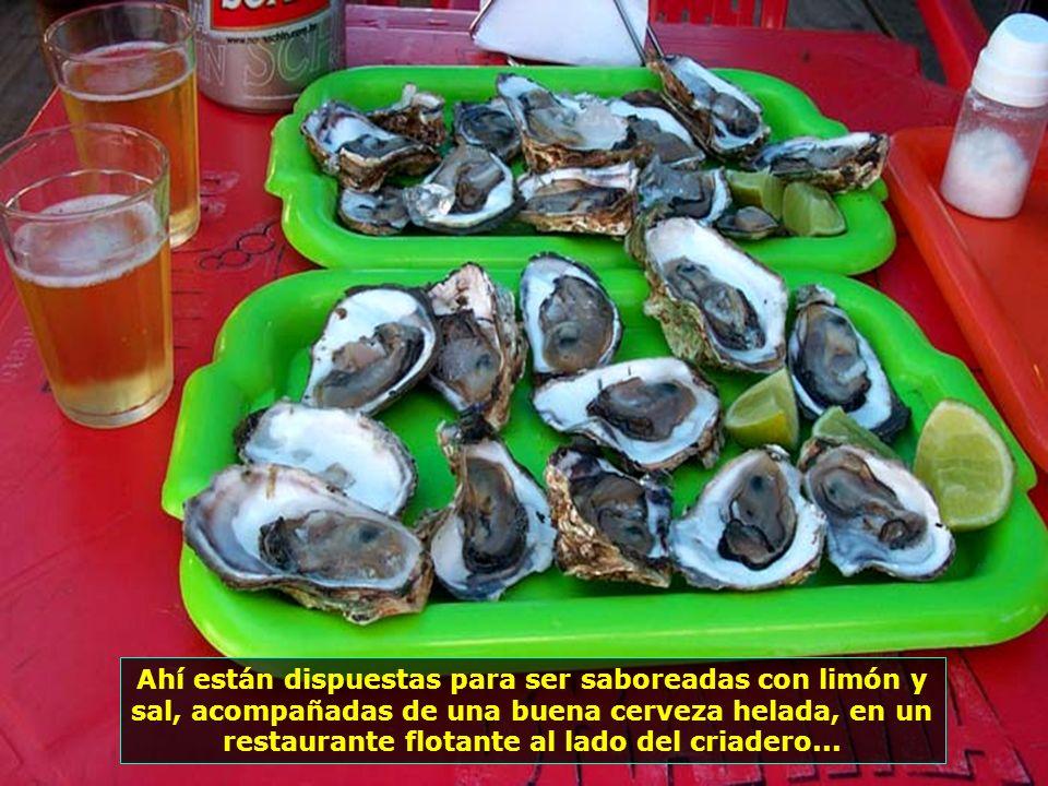 En la Playa de Canavieiras, un criadero de ostras despierta la curiosidad de los turistas...