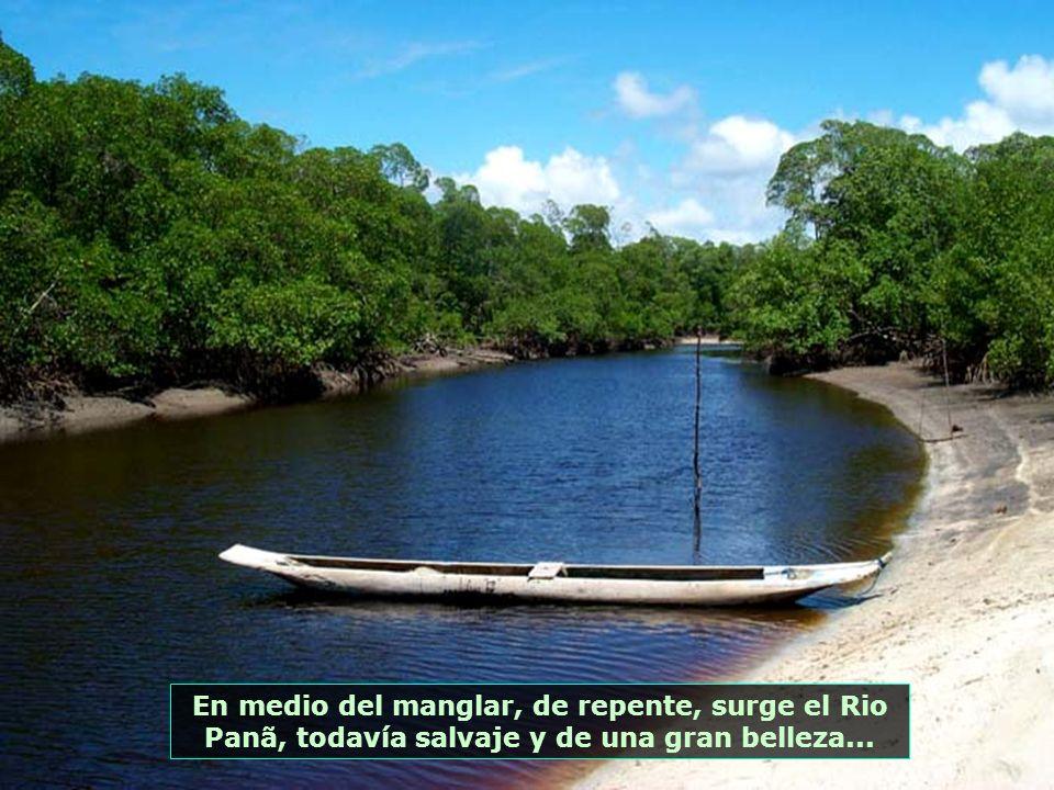 Otra excursión posible con la marea baja es por el interior del manglar de Ponta do Panã, al final de la Playa del Encanto. Cuando sube la marea queda