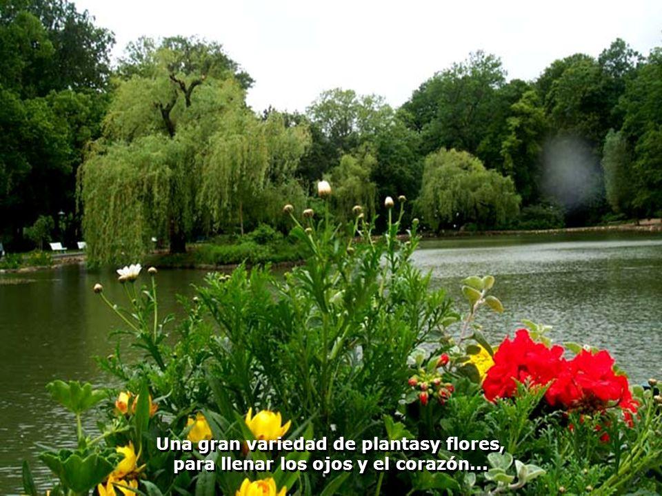 Áreas para descanso y recreación, en sus lagos, pequeños barcos y todo muy florido...