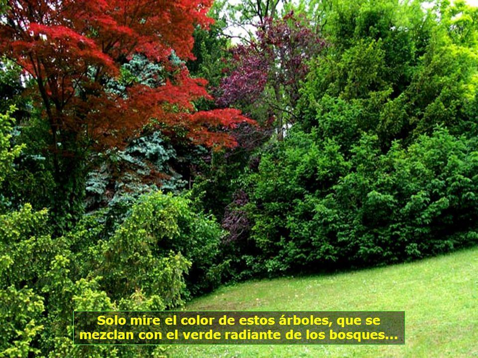 La Obra Divina estampada en árboles y plantas, de colores y belleza exuberantes...