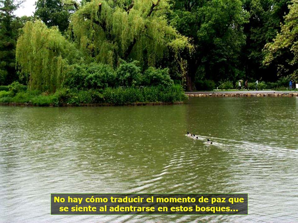 Estatuas, jardines, bosques, lagos, riachuelos, todo se mezcla en un solo lugar, en perfecta armonía...