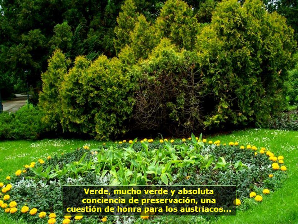 No hay cómo traducir el momento de paz que se siente al adentrarse en estos bosques...