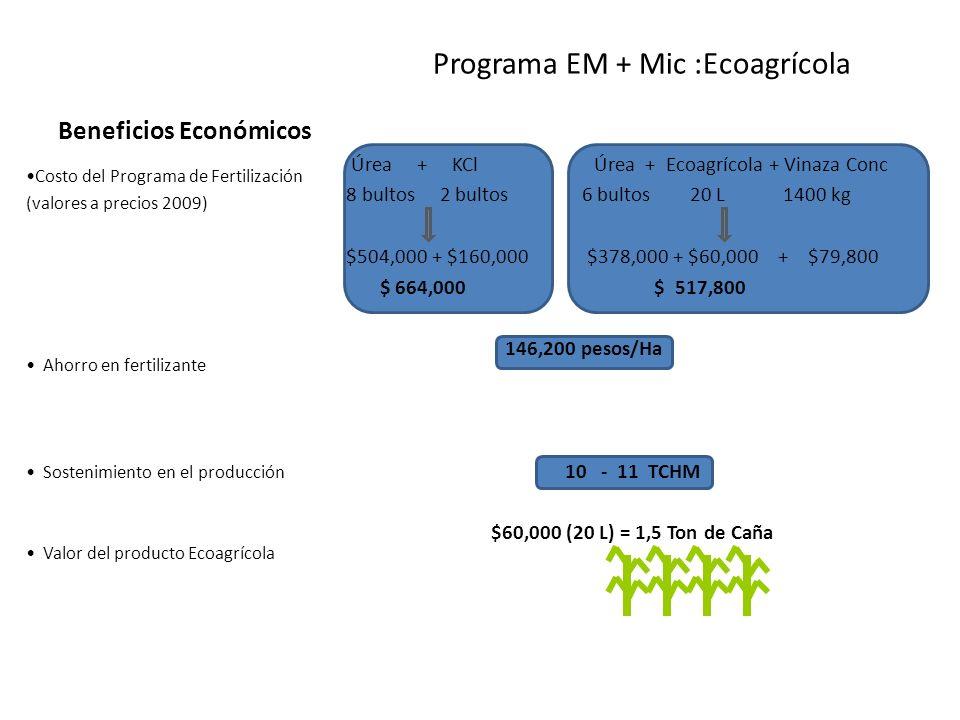 Beneficios Económicos Programa EM + Mic :Ecoagrícola Úrea + KCl Úrea + Ecoagrícola + Vinaza Conc 8 bultos 2 bultos 6 bultos 20 L 1400 kg $504,000 + $1