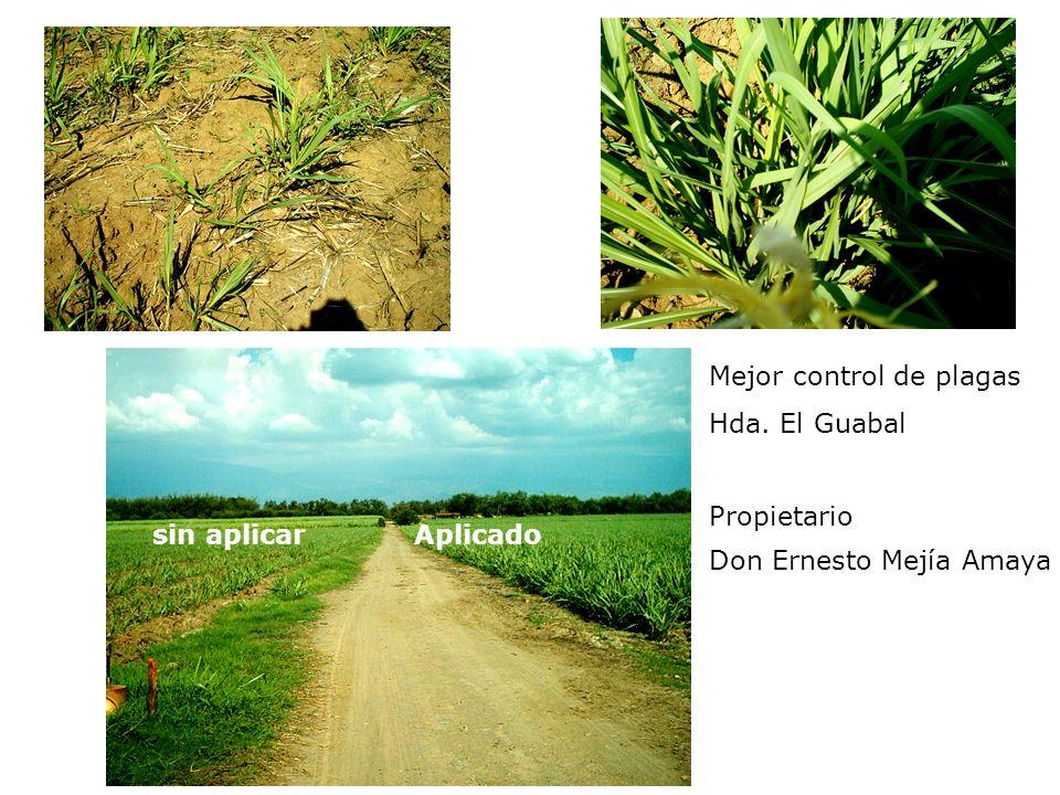 Mejor control de plagas Hda. El Guabal Propietario Don Ernesto Mejía Amaya sin aplicar Aplicado