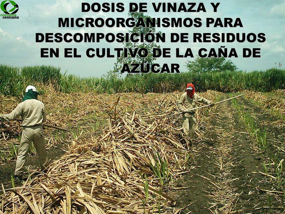 DOSIS DE VINAZA Y MICROORGANISMOS PARA DESCOMPOSICIÓN DE RESIDUOS EN EL CULTIVO DE LA CAÑA DE AZÚCAR