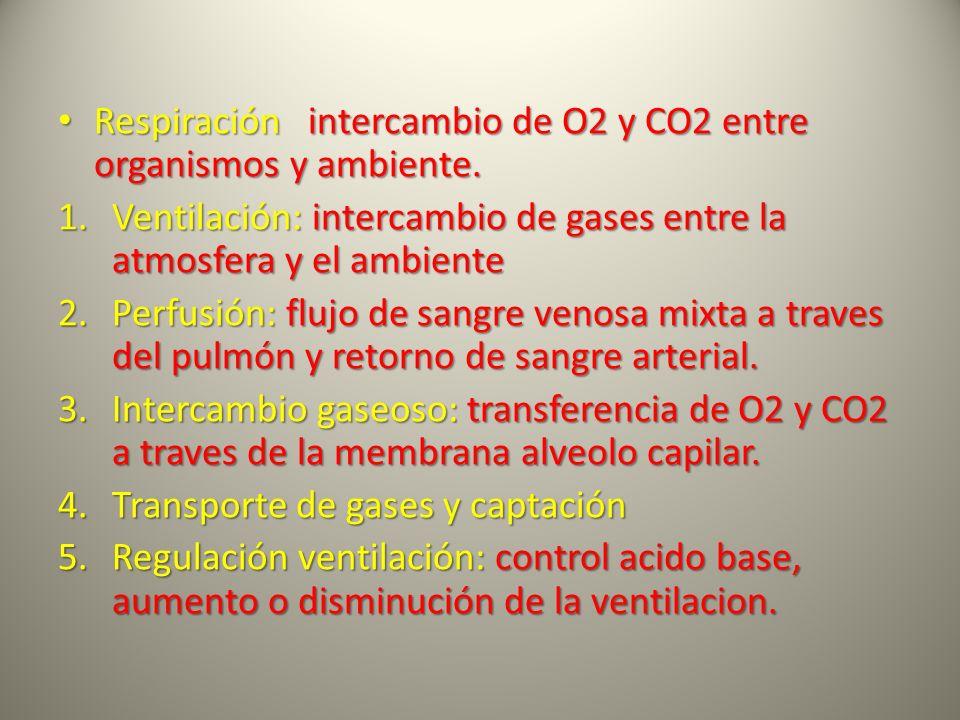 Respiración intercambio de O2 y CO2 entre organismos y ambiente. Respiración intercambio de O2 y CO2 entre organismos y ambiente. 1.Ventilación: inter