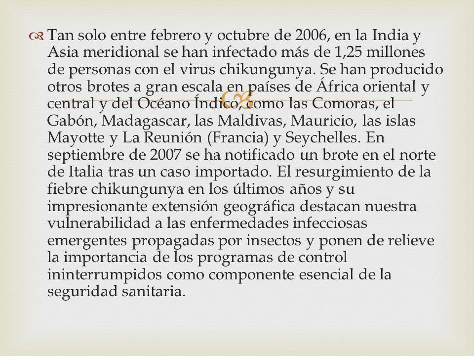 Tan solo entre febrero y octubre de 2006, en la India y Asia meridional se han infectado más de 1,25 millones de personas con el virus chikungunya. Se