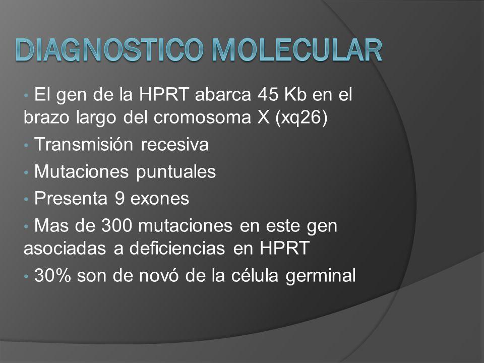 El gen de la HPRT abarca 45 Kb en el brazo largo del cromosoma X (xq26) Transmisión recesiva Mutaciones puntuales Presenta 9 exones Mas de 300 mutaciones en este gen asociadas a deficiencias en HPRT 30% son de novó de la célula germinal