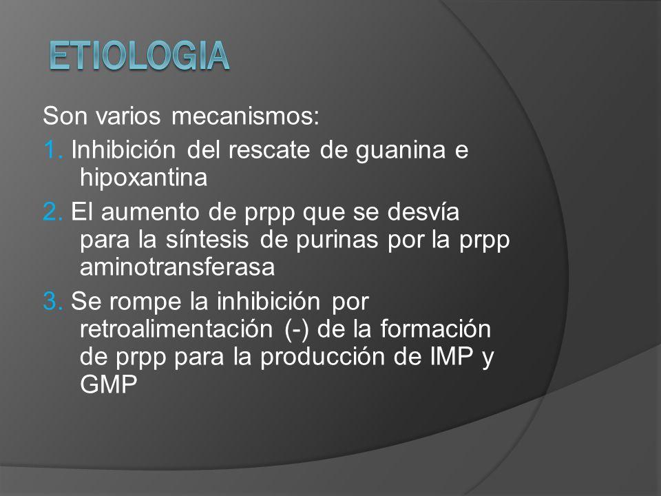 Son varios mecanismos: 1. Inhibición del rescate de guanina e hipoxantina 2. El aumento de prpp que se desvía para la síntesis de purinas por la prpp
