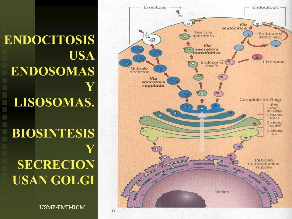 USMP-FMH-BCMH. LEZAMA14 ENDOCITOSIS USA ENDOSOMAS Y LISOSOMAS. BIOSINTESIS Y SECRECION USAN GOLGI